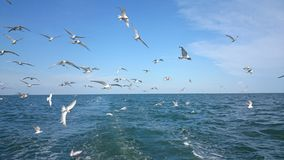 Fly. Seagull InThesea bird sky royalty free stock photo