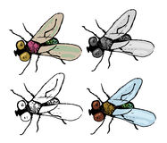 Fly. Set of four variations of fly Stock Photo