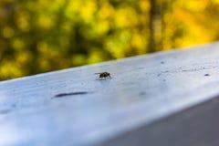Fly on shiny rail. Close up of a black fly on a shiny metal rail Royalty Free Stock Photo