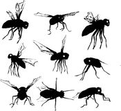 Fly silhouettes Stock Images