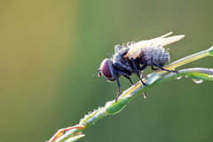 Fly sit on grass Royalty Free Stock Image