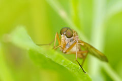 Fly sit on leaf. Russian nature Royalty Free Stock Photography