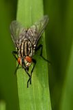 Fly sitting Stock Photos