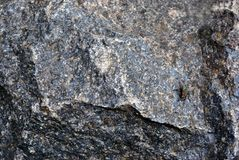 Fly sitting on dark gray granite rock, background texture close up. Detail stock photography