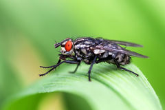 Fly. Sitting on the grass Stock Photography