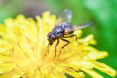 Fly sitting on plant Stock Photos
