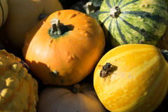 Fly on small Halloween decoration pumpkins stock image