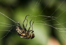 Fly in a spider trap. Fly trapped in a spider Stock Photos