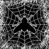 Fly in spiders web Stock Image