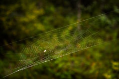Fly on a spiderweb Royalty Free Stock Photos