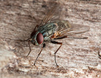 Fly on the stone Stock Images