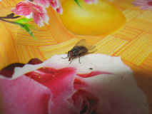 Fly on the table cloths Stock Photography
