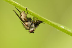 The fly Stock Photos