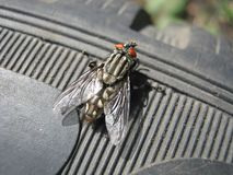 Fly on the tire. Nature animals insects fly tire tyre town city summer moment Stock Photos