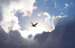 Fly to Heaven. Bird flying in the sky with a dramatic cloud formation in the background. Light shining trough which gives a symbolic value of life and hope Stock Photos
