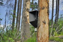 A trap used for catching insects in forest Royalty Free Stock Image
