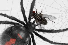 Fly Trapped on Cobweb stock illustration