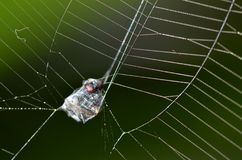 A fly trapped on a spider web or cobweb. Wait to be eaten Stock Photo