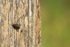 Fly on a tree Stock Photo
