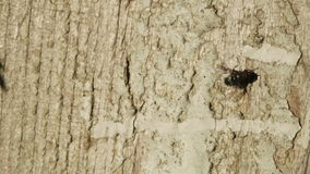 Fly on tree Stock Photography