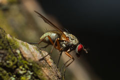 Fly on the tree Royalty Free Stock Photography