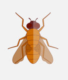 Fly Vector Stock Image