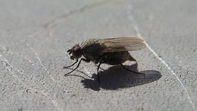 Fly waiting and leaving stock footage