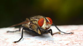 Fly Stock Photo