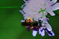 Fly-wasp Stock Images