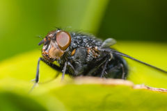 Fly watching you. Close up on a flys eye royalty free stock photos