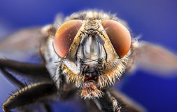 Fly, water drops, wet, rain, macro, big fly eyes Stock Images