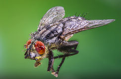 Fly, water drops, wet, rain, macro, big fly eyes Stock Image