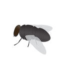 Fly. On a white background royalty free illustration