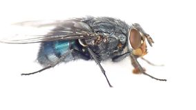 Fly, on a white background stock footage