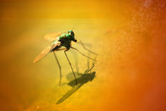 Fly in the wild Stock Images
