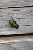 Fly on wood Stock Images