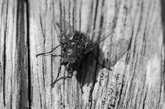 Fly on Wood Royalty Free Stock Photography