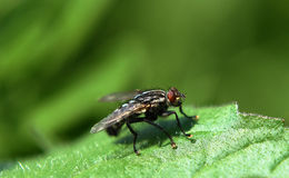 Fly on wood in sunny day Royalty Free Stock Image