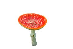 Flyagaric mushroom on a white background Stock Photography