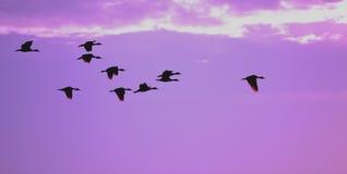 flyaway Lizenzfreie Stockbilder