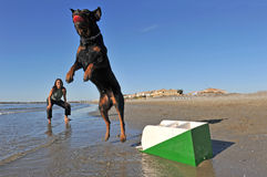 Flyball on the beach Royalty Free Stock Image