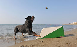 Flyball sur la plage Photographie stock