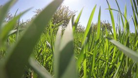 Flyby grass. stock video footage