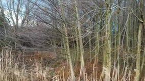 Flyby zimy drzewa zdjęcie wideo