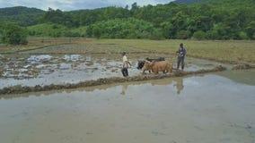 Flycam显示部族犁米领域的人和黄牛由小山 股票视频