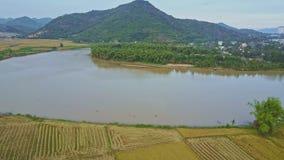 Flycam-Bewegungen über Reisfeldern und -see gegen Landschaftshimmel stock video
