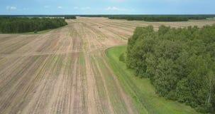 Flycam desciende al campo cosechado cerca de bosque con el claro almacen de metraje de vídeo