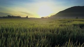 Flycam entfernt von Dawn Shining über Reis-Feldern gegen Hügel stock video footage