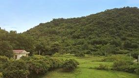 Flycam flyttningar ovanför tjur på äng omgivna träd mot kullar