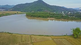 Flycam moves above rice fields and lake against landscape sky. Flycam moves above immense rice fields and peaceful lake against pictorial landscape and blue sky stock video
